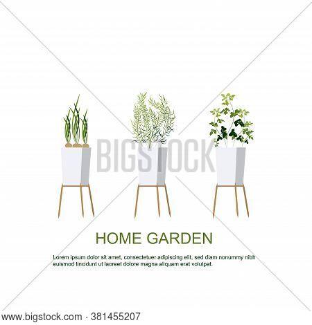 Home Garden. Herbs Garden. Home Gardening. Horticulture. Houseplants. Green Onions, Parsley, Rosemar