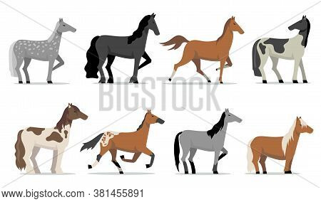 Stud Horses Set. Colorful Breed Racing Stallions Standing And Running. Isolated Flat Vector Illustra