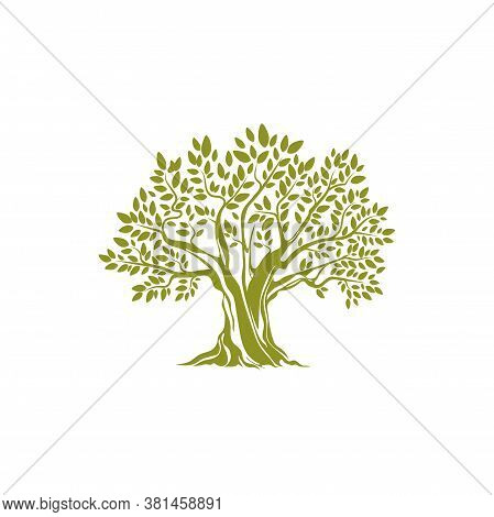 Green Tree With Leaves Isolated Icon. Vector European Olive Botanical Organic Plant Emblem. Mediterr