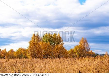 Prairie Landscape With Grasses, Meadows, Trees And A Bright Blue Sky With White Clouds. Wild Autumn