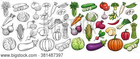 Vegetables Drawn Vector Icons Set. Illustration Of Colored And Monochrome Vegetables For Design Farm