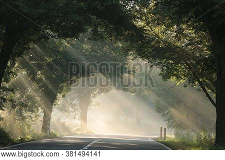 Sun rays trees country road path Nature background misty foggy morning Nature background sunny forest dawn sunrise Nature mist fog Nature background Nature background trail tree Nature background light sunlight Nature background sunbeams Nature background