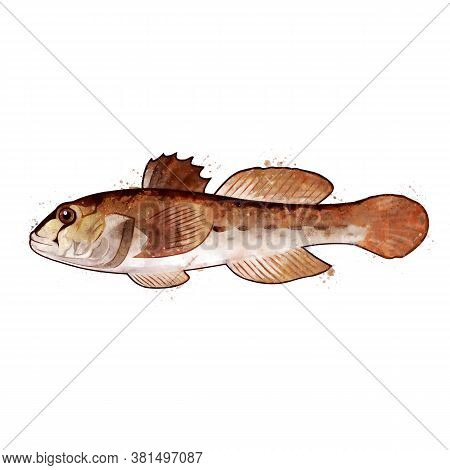 Goby, Watercolor Isolated Illustration Of A Fish.