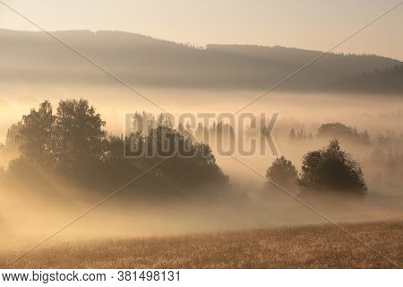 Trees in fog mist valley sunrise Nature background sun sunset Nature background Nature landscape Nature background. pine spruce tree conifer Nature background morning Nature background misty foggy Nature background dawn daybreak Nature background.