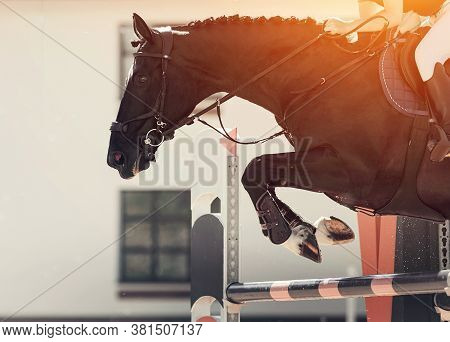 The Black Horse Overcomes An Obstacle. Equestrian Sport, Jumping. Overcome Obstacles. Dressage Of Ho