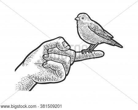 Canary Pet Bird Sitting On A Finger Sketch Engraving Vector Illustration. T-shirt Apparel Print Desi