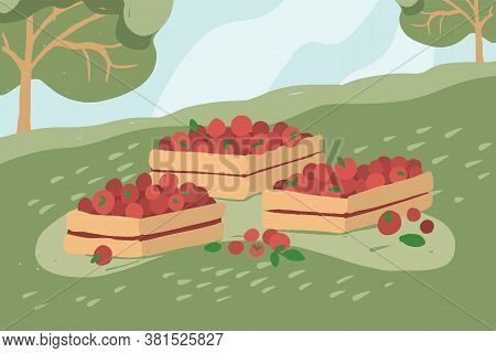 Wooden Boxes Full Of Red Fruits, Vegetables On Grass. Gathering Apple In Orchard. Garden Landscape I