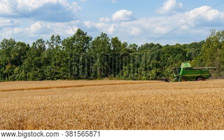 Green Combine Harvester In Distance Harvests Ripe Wheat In Field, Against Of Trees And Blue Sky With