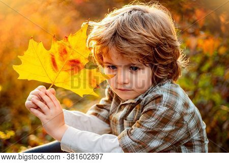 Happy Child Dreaming In Autumn Park. Cute Boy With Maple Leaves Outdoors. Toddler Wears Autumn. Autu