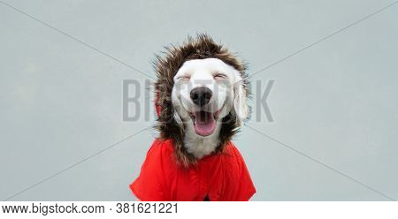 Happy Autumn Puppy Dog Wearing A Red Parka, Coat, Isolated On Blue Background.