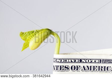 One Us Dollar Paper Money Close-up, Us Currency Freely Convertible Us Currency Along With A Bean Spr