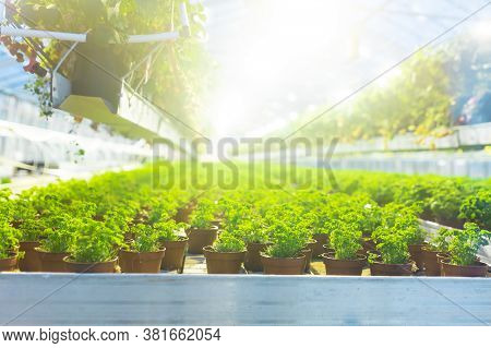 Plantation Of Plants In A Greenhouse. Heating And Creating A Climate For Plants In Cold Countries