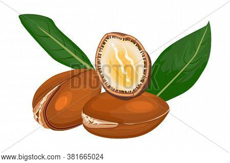Argan Isolated On White Background. Argan Tree Branch, Fruits, Nuts And Leaves. Cosmetic And Medical