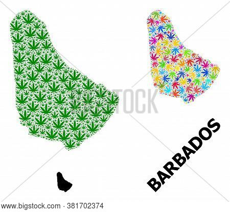 Vector Hemp Mosaic And Solid Map Of Barbados. Map Of Barbados Vector Mosaic For Hemp Legalize Campai