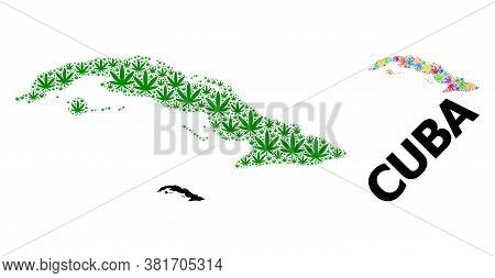 Vector Weed Mosaic And Solid Map Of Cuba. Map Of Cuba Vector Mosaic For Hemp Legalize Campaign. Map