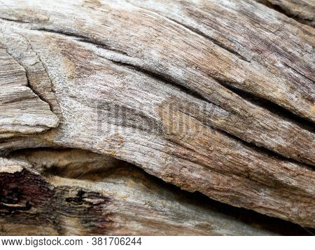 Surface Of An Old  Decomposed Wood Trunk As Texture, Background