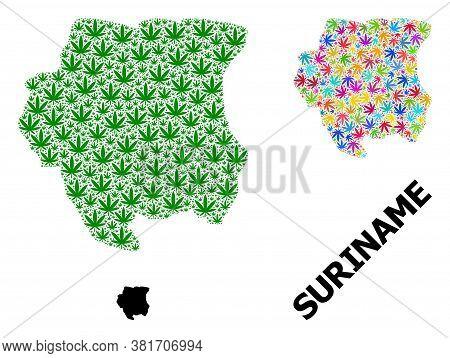 Vector Marijuana Mosaic And Solid Map Of Suriname. Map Of Suriname Vector Mosaic For Weed Legalize C