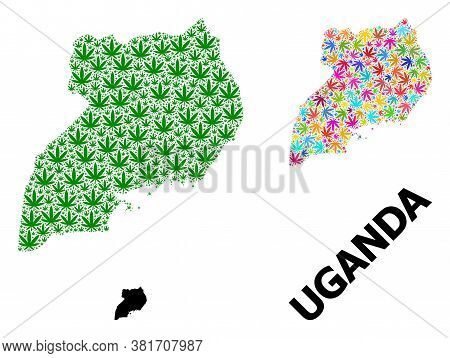 Vector Hemp Mosaic And Solid Map Of Uganda. Map Of Uganda Vector Mosaic For Hemp Legalize Campaign.