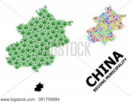 Vector Hemp Mosaic And Solid Map Of Beijing Municipality. Map Of Beijing Municipality Vector Mosaic