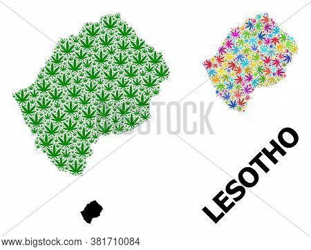 Vector Hemp Mosaic And Solid Map Of Lesotho. Map Of Lesotho Vector Mosaic For Hemp Legalize Campaign