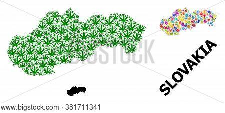 Vector Hemp Mosaic And Solid Map Of Slovakia. Map Of Slovakia Vector Mosaic For Cannabis Legalize Ca