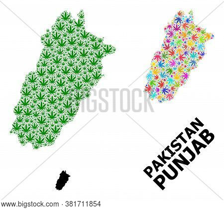 Vector Weed Mosaic And Solid Map Of Punjab Province. Map Of Punjab Province Vector Mosaic For Weed L