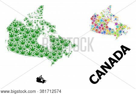 Vector Hemp Mosaic And Solid Map Of Canada. Map Of Canada Vector Mosaic For Hemp Legalize Campaign.