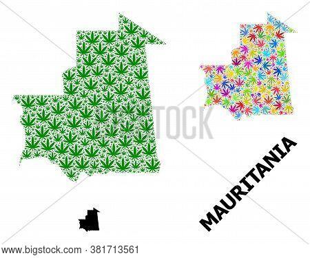 Vector Marijuana Mosaic And Solid Map Of Mauritania. Map Of Mauritania Vector Mosaic For Marijuana L