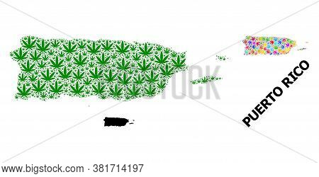 Vector Hemp Mosaic And Solid Map Of Puerto Rico. Map Of Puerto Rico Vector Mosaic For Hemp Legalize