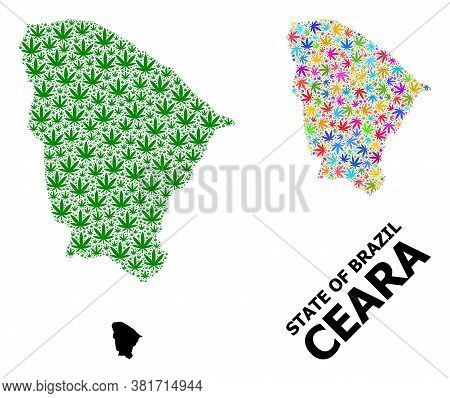 Vector Hemp Mosaic And Solid Map Of Ceara State. Map Of Ceara State Vector Mosaic For Hemp Legalize