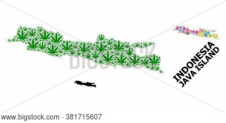 Vector Hemp Mosaic And Solid Map Of Java Island. Map Of Java Island Vector Mosaic For Cannabis Legal