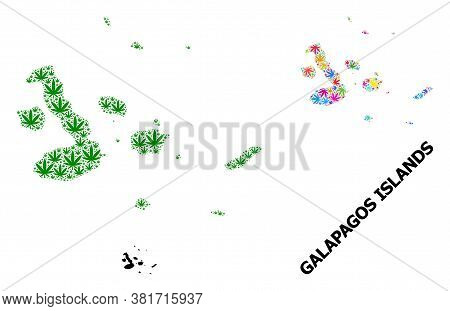 Vector Weed Mosaic And Solid Map Of Galapagos Islands. Map Of Galapagos Islands Vector Mosaic For We