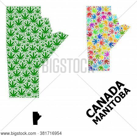 Vector Cannabis Mosaic And Solid Map Of Manitoba Province. Map Of Manitoba Province Vector Mosaic Fo