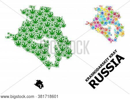 Vector Cannabis Mosaic And Solid Map Of Krasnodarskiy Kray. Map Of Krasnodarskiy Kray Vector Mosaic