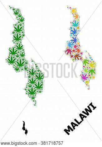 Vector Cannabis Mosaic And Solid Map Of Malawi. Map Of Malawi Vector Mosaic For Cannabis Legalize Ca