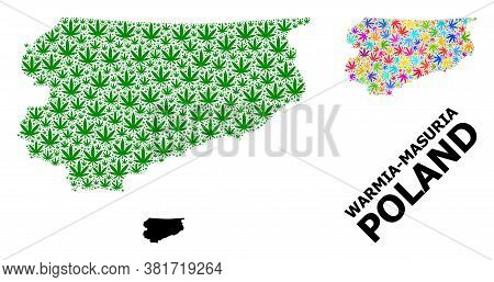 Vector Weed Mosaic And Solid Map Of Warmia-masuria Province. Map Of Warmia-masuria Province Vector M