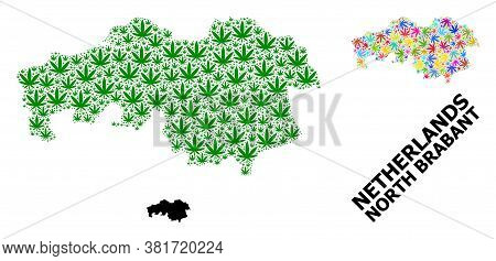 Vector Weed Mosaic And Solid Map Of North Brabant Province. Map Of North Brabant Province Vector Mos