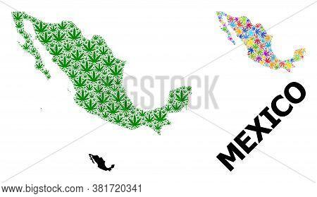 Vector Marijuana Mosaic And Solid Map Of Mexico. Map Of Mexico Vector Mosaic For Marijuana Legalize