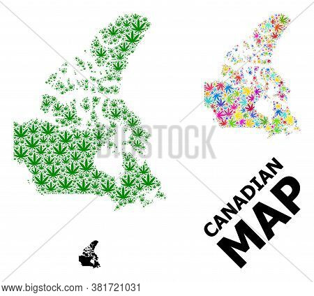 Vector Cannabis Mosaic And Solid Map Of Canada. Map Of Canada Vector Mosaic For Weed Legalize Campai