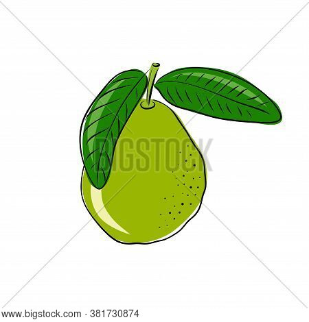 Guava Fruit And A Slice. Isolated Objects. Guava Fruit Logo. Hand Drawn Vector Illustration On White