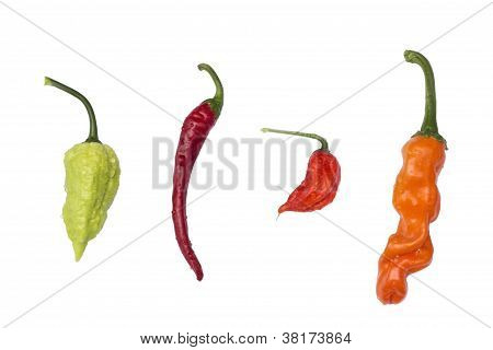 Four species of peppers isolated on white with waterdrops