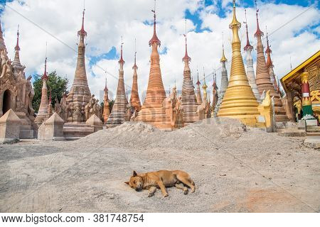 A Dog Sleeping In Front Of Nyaung Ohak Pagodas The Group Of Ancient Pagodas In Indein Village West O