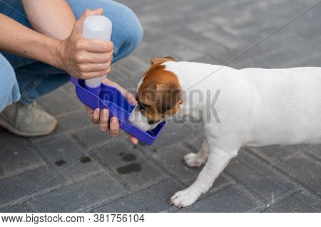 The Dog Drinks From A Portable Pet Water Bottle While Walking With The Owner