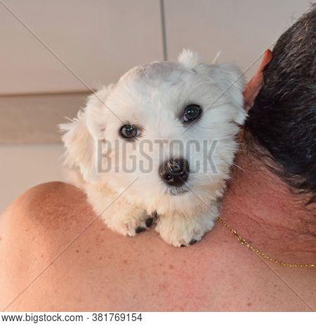 Dog, Man's Best Friend And Faithful Companion