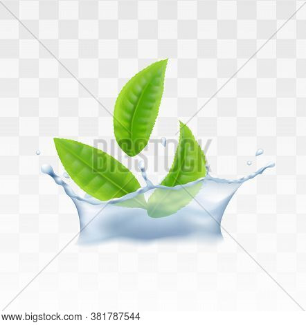 Green Tea, Mint Herbal Leaves In Water Realistic Vector Illustration Isolated.