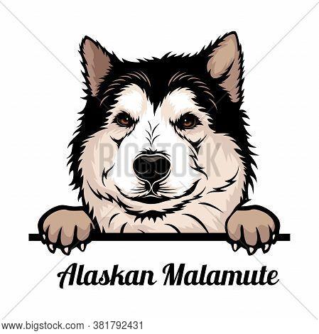 Alaskan Malamute - Color Peeking Dogs - Breed Face Head Isolated On White