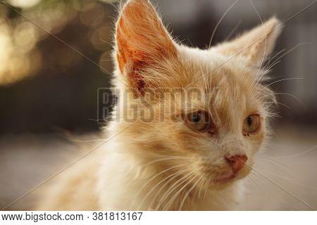 Grimy Fluffy Beige Kitten Sitting Portrait Outdoor.