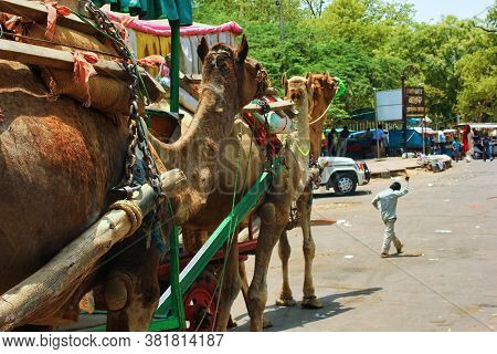 Agra, India - May 12, 2012: Camel Cart Carriage For Tourists Near Tajmahal Due To Prohibition Of Pet