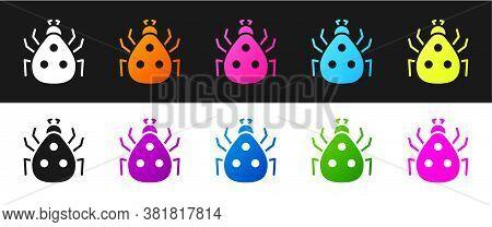Set Ladybug Icon Isolated On Black And White Background. Vector