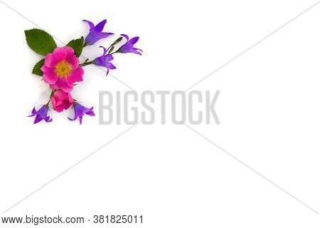 Violet Blue Flowers Bell And Flowers Pink Dog-rose On A White Background With Space For Text. Top Vi